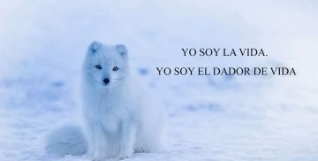 YO SOY LA VIDA. YO SOY EL DADOR DE VIDA